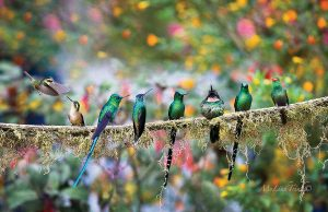 Humming Birds, Linh M. Trinh