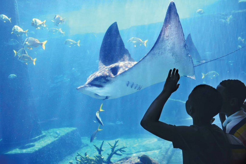 The Responsible Angling Education Program field trip to the Bahamas included visiting Atlantis Aquarium in Nassau, photo by MARINE EDUCATION INITIATIVE